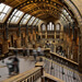 Reisefoto London, Natural History Museum